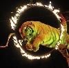 Цирки в Железногорске
