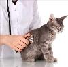 Ветеринарные клиники в Железногорске